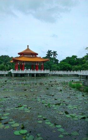 Tainan Park: 美しい蓮