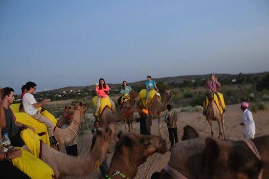 Reggie's Camel Camp: Camel ride