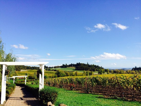 St. Innocent Winery: Amazing!
