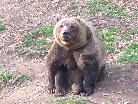 Zoo Plzen : 4 orsi bellissimi