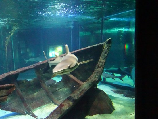 Nemo .. - Picture of Underwater World Langkawi, Langkawi - TripAdvisor