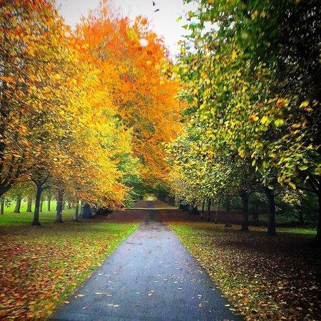 Lucknam Park: That drive.