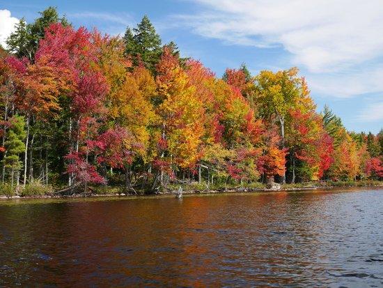 Packbasket Adventures: Fall Foliage