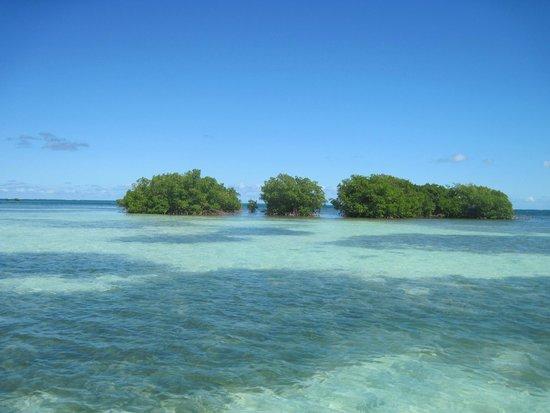 Blue Lagoon Excursion : L'Ilet blanc