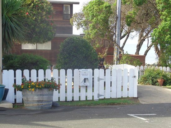 Cayucos Motel: There is a smaller fenced areas for dogs.  You can see the ocean through the trees  to the right