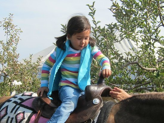 Jackson's Orchard : Granddaughter riding horse
