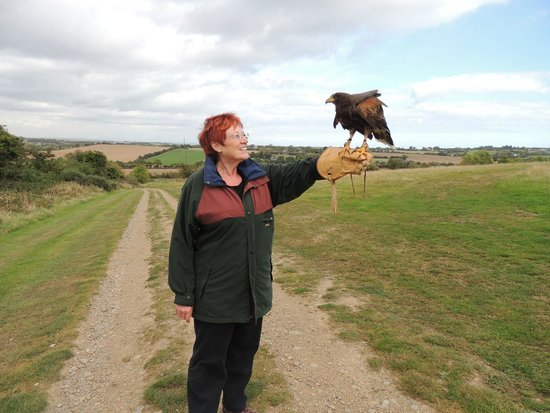 Dublin Falconry : Cookie and me on our walk