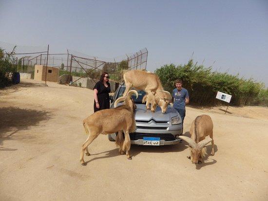 monkeys   picture of africa safari park egypt   tripadvisor