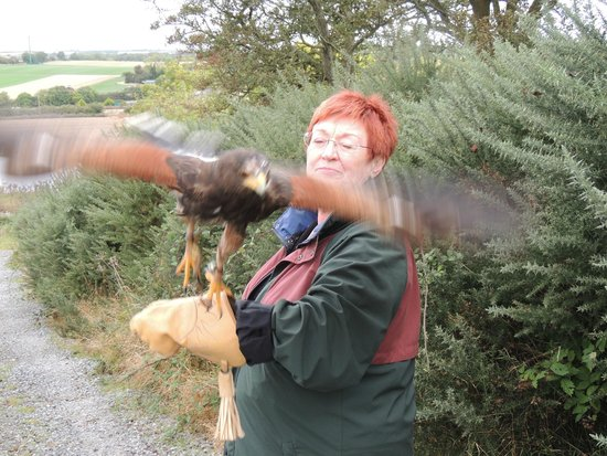 Dublin Falconry : Off she goes...