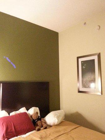 Quality Inn & Suites: double room, looks like new paint