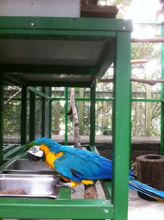 Ashmore Palms Holiday Village: One of the Macaws