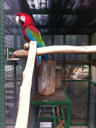 Ashmore Palms Holiday Village: Another Macaw