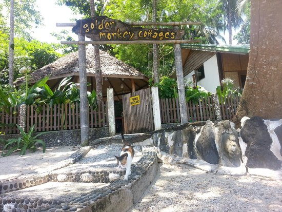 the gate and the wildlife picture of golden monkey cottages el rh tripadvisor com golden monkey cottages el nido palawan golden monkey cottages review