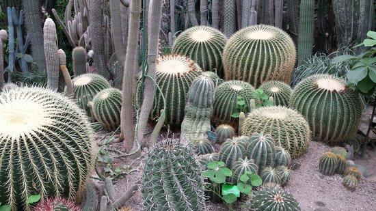 Palmiarnia Poznanska (Palmenhaus Poznan) : Kaktusy