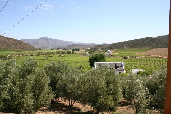 Orange Grove Farm : View from Longlands Cottage