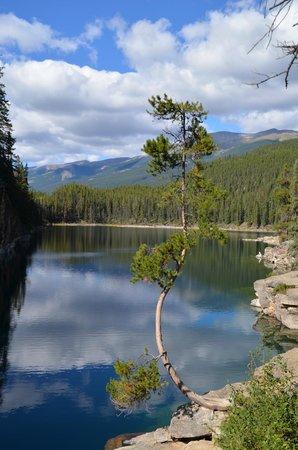 Bear's Den: Nähere Umgebung von Jasper