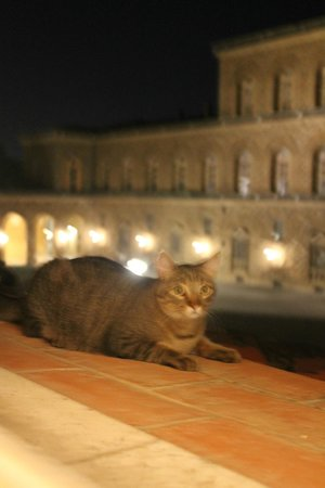 Soggiorno Pitti : наш флорентийский друг