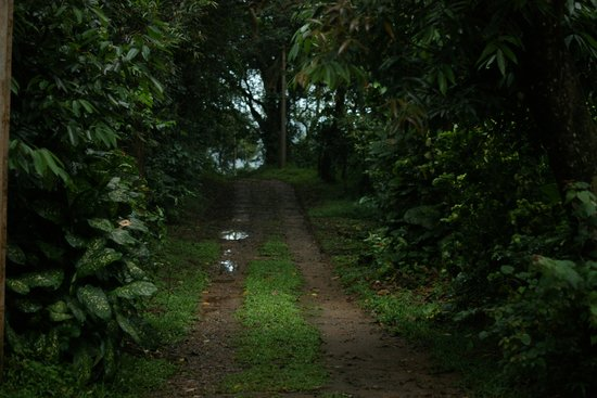 Verdure Wayanad : Path to the dining cottage