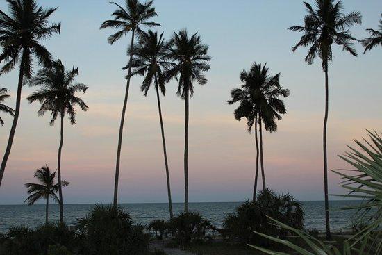 Safari Mashariki Lodge: palms
