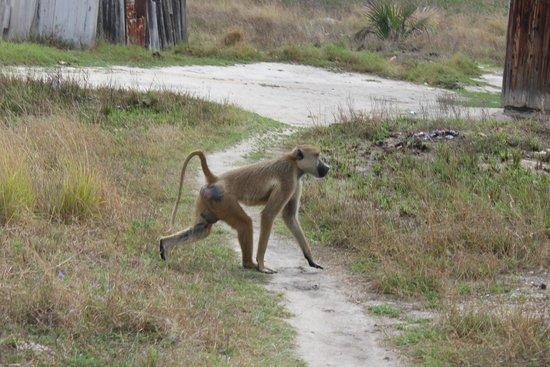 Safari Mashariki Lodge: money