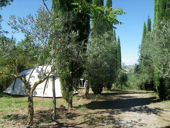 Campeggio Belmondo Montepulciano: Our tent = view