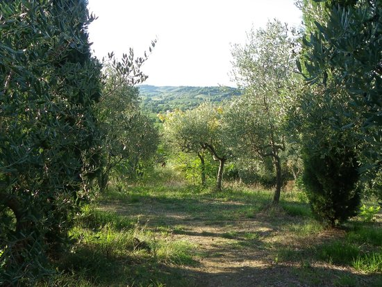 Campeggio Belmondo Montepulciano: Olive trees, cypresses and a view