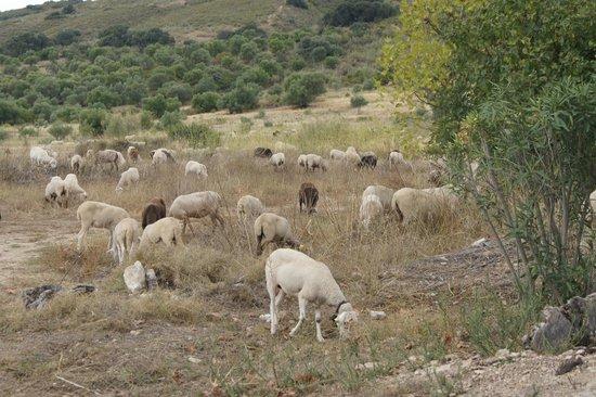 Hotel Molino del Arco: Les brebis et moutons
