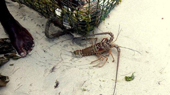 Don Fresh Lobsters: Choix du diner