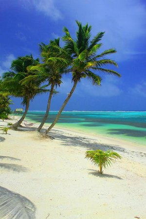 Tranquility Bay Resort: Best Snorkle Beach on Ambergris Caye