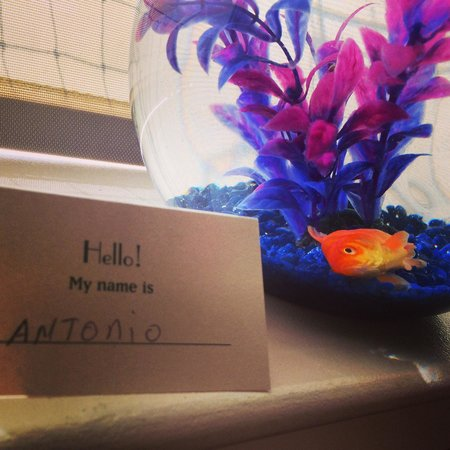 Monaco Baltimore, a Kimpton Hotel: Maybe the goldfish in your room policy shiuld be rethought... Nothing like waking up to a dead f
