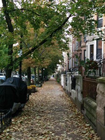 Lefferts Manor Bed & Breakfast: My favorite picture of the street where Lefferts Manor is located.