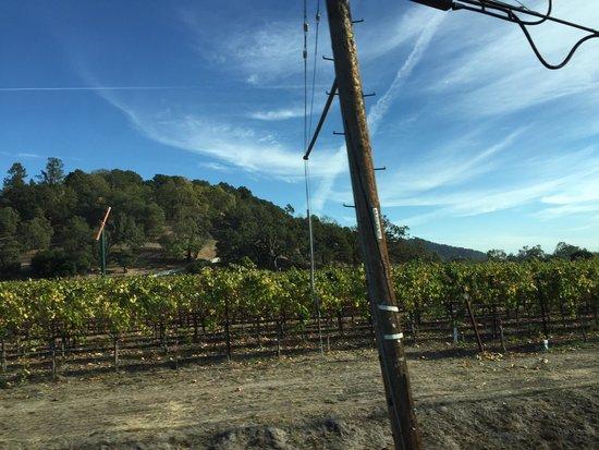 Quixote Winery: Napa
