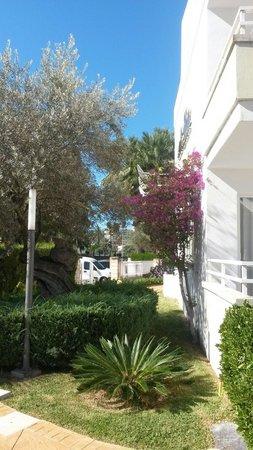 Universal Aparthotel Elisa: På hotellet