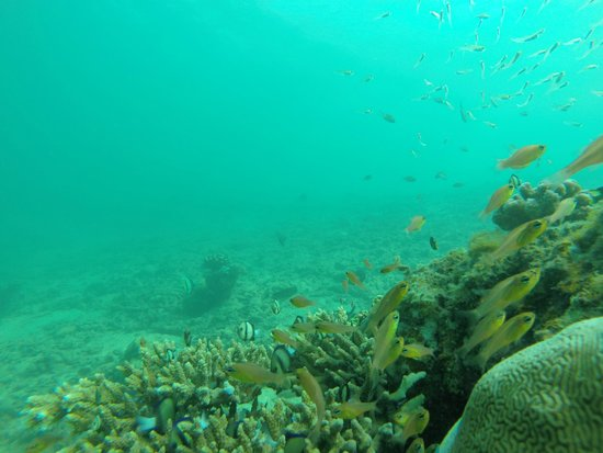 Blue-Fin Diving: Colori nel blu