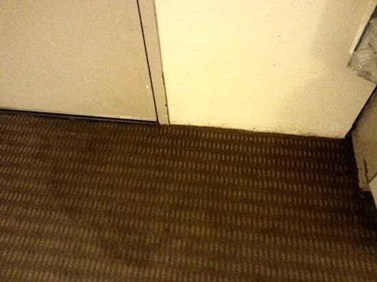 Quality Inn : I was afraid to walk barefoot on this floor, it is really that bad.