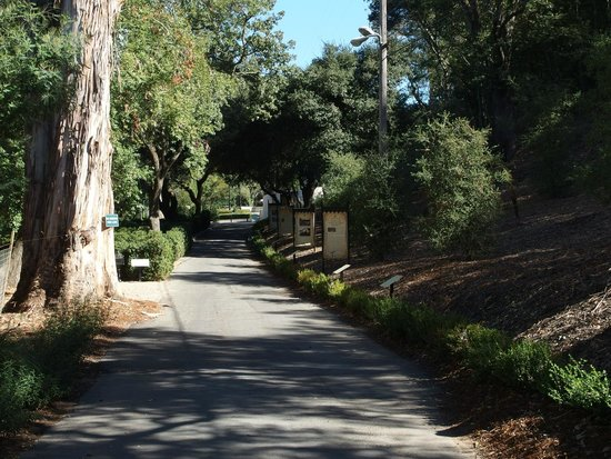 Buena Vista Winery: Beautiful grounds. Pathway to winery after parking car.