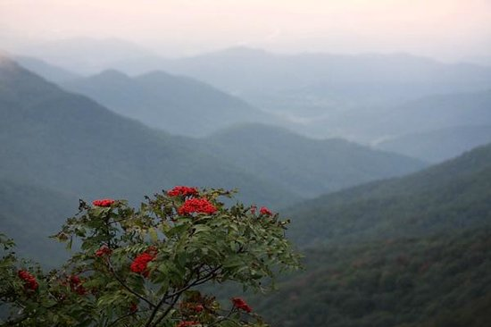 View From The Visitor 39 S Center Picture Of Craggy Gardens Asheville Tripadvisor