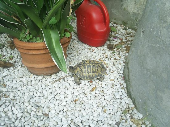 Relais Sassetti Bed and Breakfast: Turtle