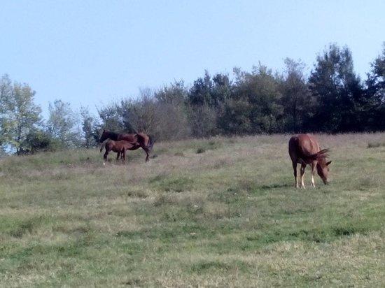 Ristorante dell'Agriturismo Tenuta dei Quiriti: I cavalli della tenuta sono liberi di muoversi in un area vastissima