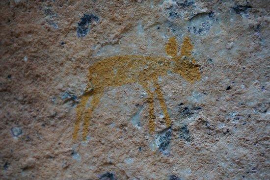 Sevilla Rock Art Trail: Bat-eared fox
