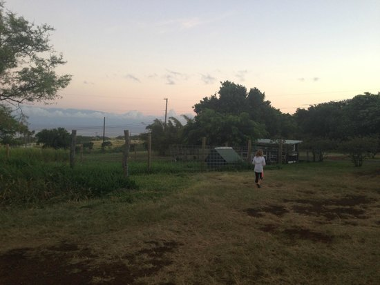 Puakea Ranch : Early morning visit to the bunnies and to gather eggs