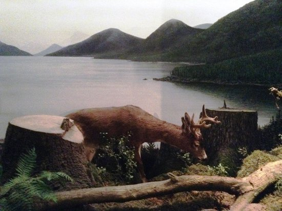 Southeast Alaska Discovery Center: One of the Exhibits