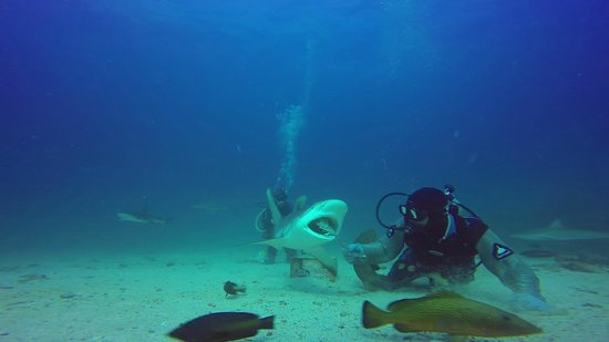 Dive Safaris: Marc feeding the Reef Shark