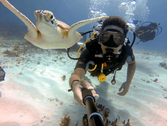 Always Diving & Water Sports : Chitales, cancún