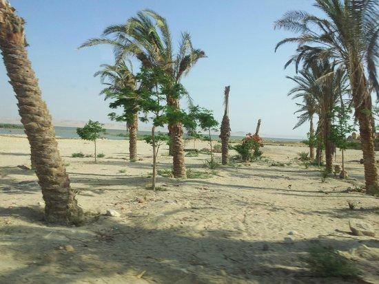 Al-Fayoum Oasis : Oasis de Al Fayum