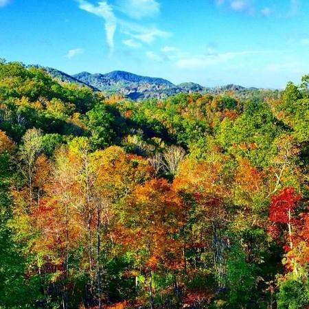 Lands Creek Log Cabins: Lands Creek property