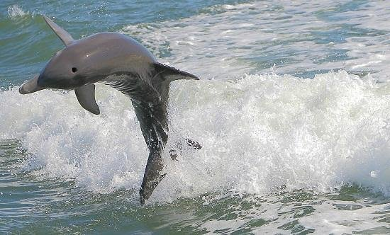 Dolphin Racer : Dolphin 3