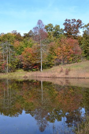 Locke Mountain Cabins: Small pond on the property - beautiful quite place to relax and meditate