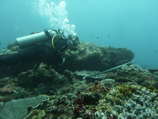 Some Of The Amazing Fish Life Picture Of Adventure Scuba
