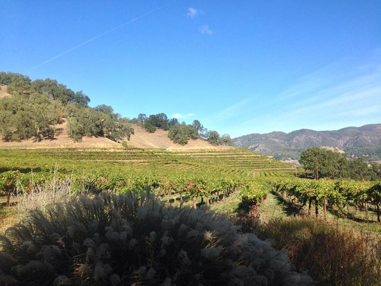 Nelson Family Vineyards : View near the tasting room